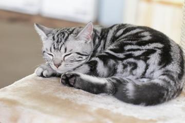 かわいいニャンコ 子猫