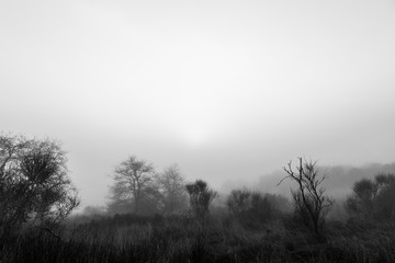 Some trees and plants in the midst of low fog, with a sunrise just above