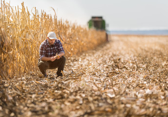 farmer in corn fields