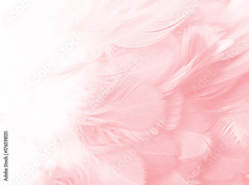 Wall mural Coral Pink vintage color trends feather texture background