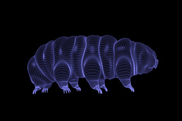 tardigrade, water bear 3d wireframe rendering on black background