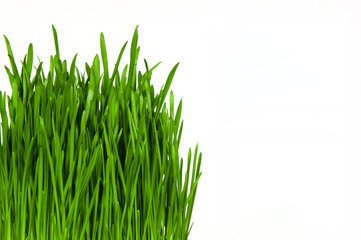 Fresh grass isolated on white background. with copy space.