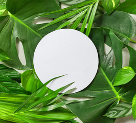Wall Mural - Various tropical leaves and white paper frame