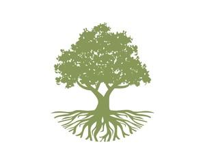 oak growth capital