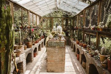 Kaktus Home