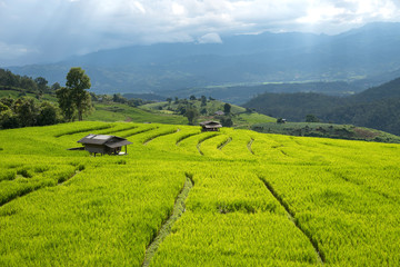 Beautiful green rice fields and bamboo hut on terraces in Thailand at Ban Pa Pong Pieng in Mae chaem, Chaing Mai.