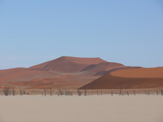 Dunes and dead trees in the Namib Desert in Namibia in Africa 3