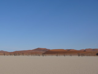 Dunes and dead trees in the Namib Desert in Namibia in Africa 2