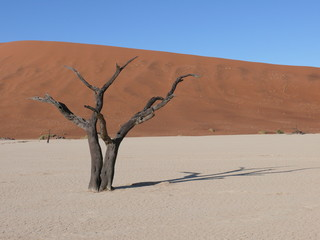 Dunes and dead tree in the Namib Desert in Namibia in Africa
