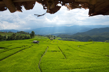 Beautiful green rice fields on terraces in Thailand at Ban Pa Pong Pieng in Mae chaem, Chaing Mai.