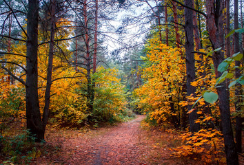 Autumn forest and a footpath leading into the scene.