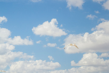 Foto op Aluminium Luchtsport Bird Albatross is flying in the blue sky with white clouds