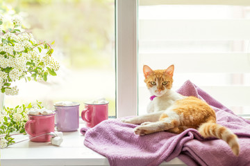 Kitty on the windowsill, cups of hot cocoa