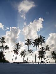 Palms and Clouds, Maldives