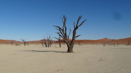 Dunes and dead tree in the Namib Desert in Namibia in Africa 6
