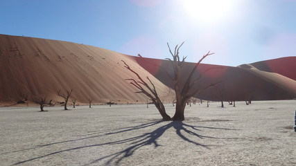 Dunes and dead tree in the Namib Desert in Namibia in Africa 5