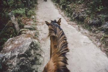 Auf dem Rücken der Pferde