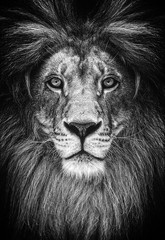 Printed roller blinds Lion Portrait of a Beautiful lion, lion in dark