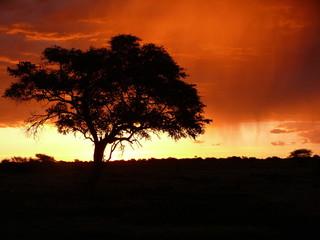 Tree in the Etosha pan during sunset in Namibia, Africa
