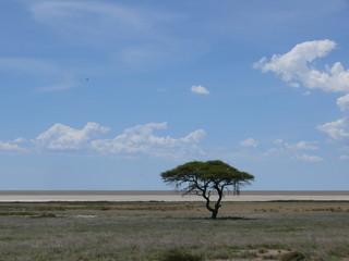 Tree in the Etosha pan in Namibia, Africa 1