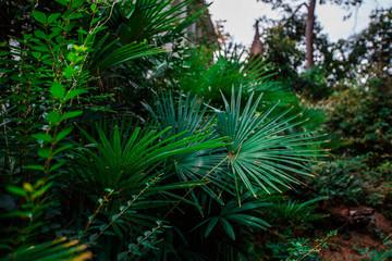 dense vegetation in the forest