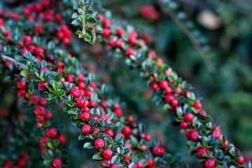 red bird berries food in garden