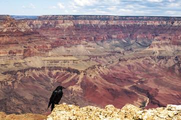 A posing crow at Navajo View Point, Grand Canyon South Rim - Arizona, United States