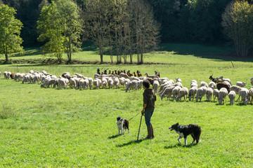 Le berger gardant un troupeau de moutons et de chèvres dans un pré