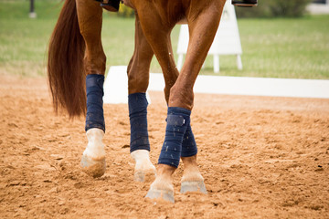 Close up of horse legs in the arena