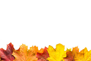 Line of autumn leaves at the bottom with a white background