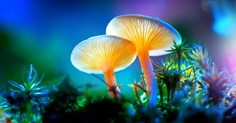 Mushroom. Fantasy glowing mushrooms in mystery dark forest closeup