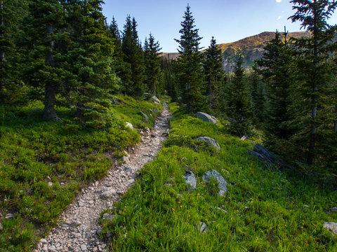 Rocky Trail Through Pine Forest