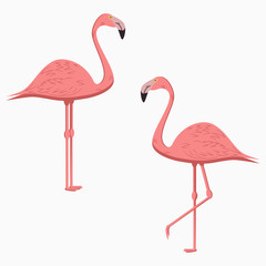 Flamingo. Set of Pink Exotic Tropical Bird. Vector illustration.