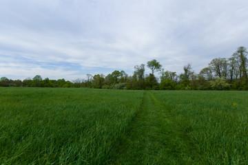 Beautiful summer grass field.
