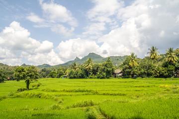 Scenic mountain village field