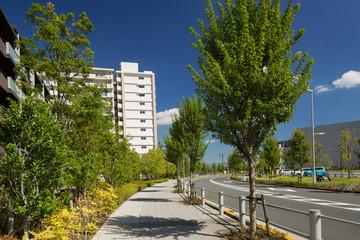 Fototapete - マンション街の並木道