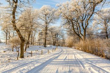Snowy winter road through the woodland