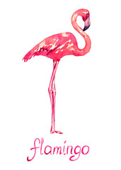 Pink flamingo standing, isolated hand painted watercolor illustration with handwritten inscription