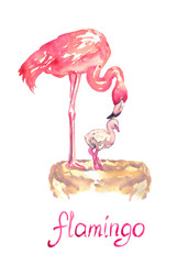 Pink flamingo standing on nest with nestling, isolated hand painted watercolor illustration with handwritten inscription