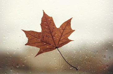 Maple leaf on the wet windows during the heavy autumn rain, rainy fall day, leaf on the glass