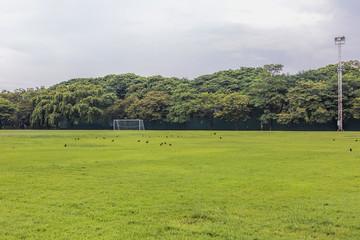 soccer field in rural areas.