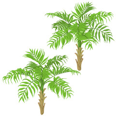 Young Palm Trees on White Background