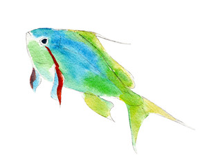The green anthias fish, watercolor illustration isolated on white background.