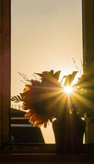 Sonnenuntergang in den Blumen