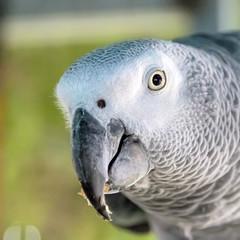 Head of big parrot bird close-up photography