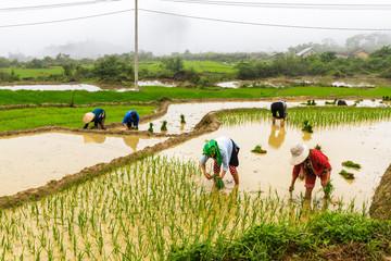 Rice terraces in Ha Giang, Vietnam