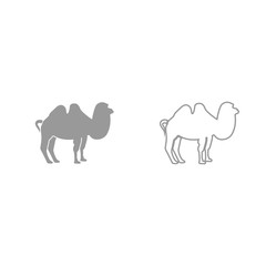 Camel grey set icon .