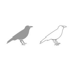 Crow grey set icon .