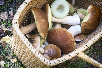 Various mushrooms in a large wicker basket .