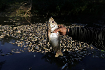 A fisherman holds a dead fish while posing for a photograph as dead fish float around his boat and on the banks of the Confuso river, in Villa Hayes